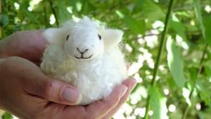smiling wool sheep