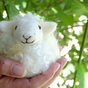 smiling wool sheep