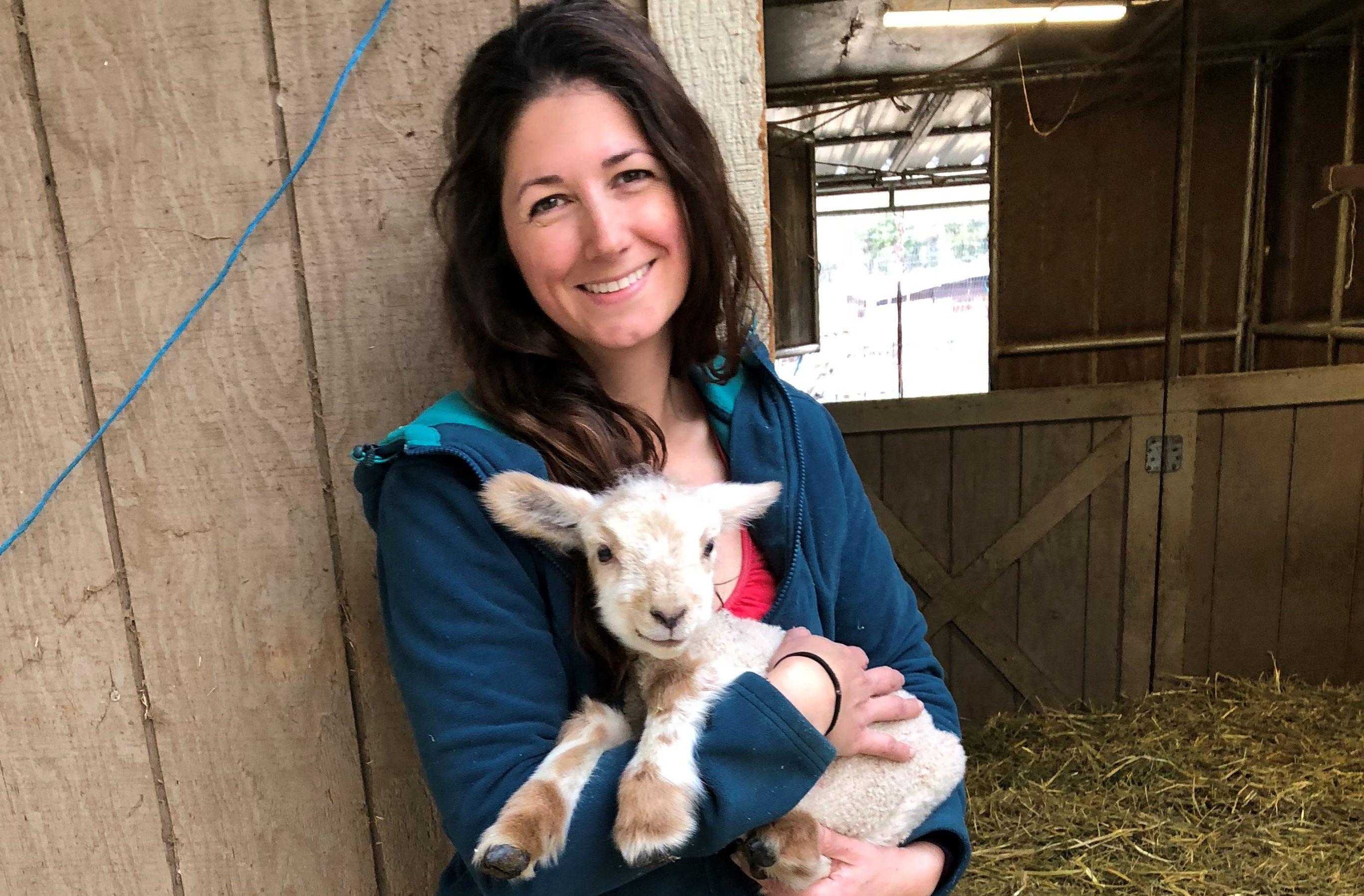 cute little lamb Clara